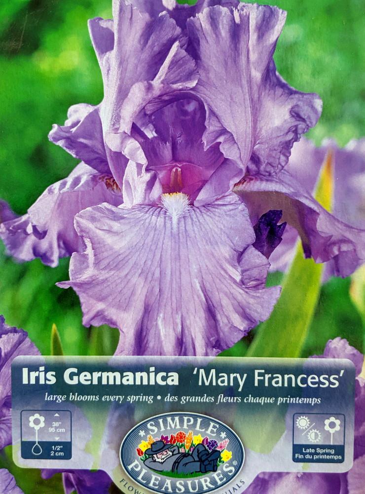 Mary Frances Bearded German Iris Rhizome - NEW - Top Size Root