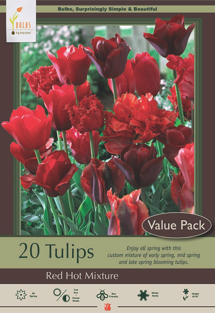 Red Hot Tulip Mix - 20 Bulbs - Fiery Red Blend! - 12/+ cm Bulbs