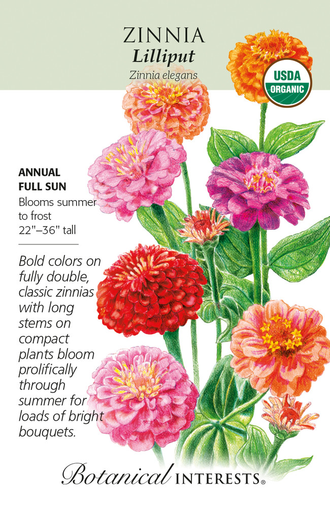 Organic Lilliput Zinnia Seeds - 500 Mg