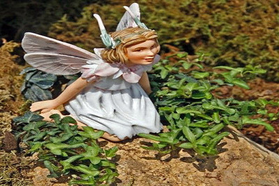 "Miniature Abundance English Ivy - 2.5"" Pot - Terrarium/Fairy Garden/House Plant"
