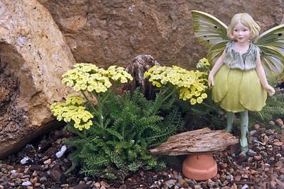 "World's Smallest Tiny Gold Yarrow - Achillea - Fairy Garden/Rock Garden-2.5"" Pot"