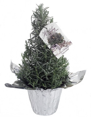 "Holiday Lavender Herb Tree - 6"" Pot with Decorative Cover and Gift Tag"