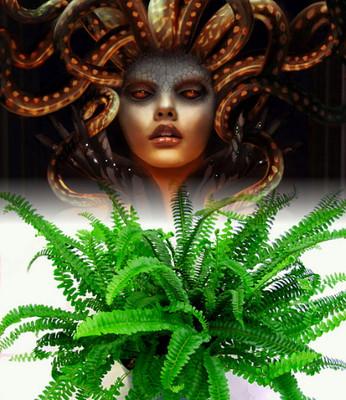 "Rare Medusa Fern - 4"" Pot - Nephrolepis obliterata - Easy to Grow House Plant"