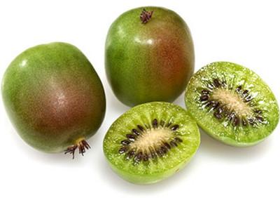 "Prolific Kiwi Vine -Hardy- Self Fruitful Female Variety- Easy to Grow - 2.5"" Pot"