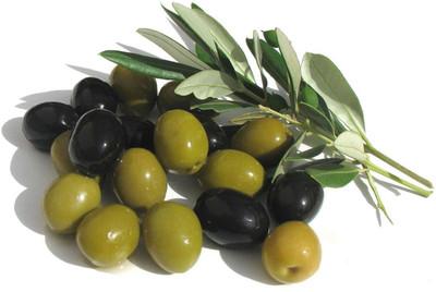 """Arbequina Olive Tree - Tree of Peace - Olea europaea  - 5"""" Pot"""