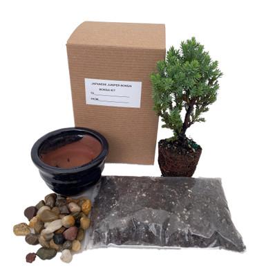 Bonsai Tree Gift Kit plus Live Japanese Juniper Tree - Ceramic Bonsai Pot