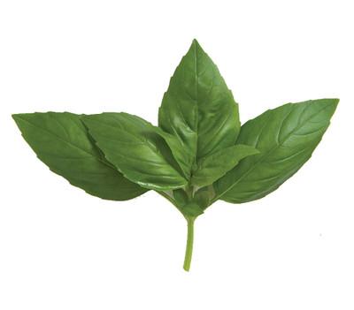 """Aroma 2 Genovese Sweet Basil Herb - 3"""" Pot"""