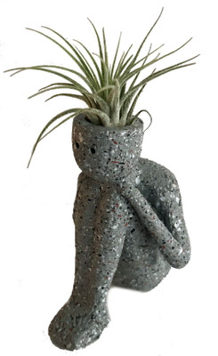 """Thinkers 2.0 Ceramic Vase/Living Air Plant - Grey-  2"""" x 2"""" x 4"""" Live Trends"""
