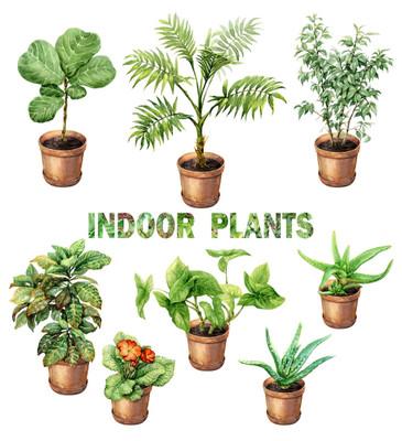 https://d3d71ba2asa5oz.cloudfront.net/12001418/images/indoorplants.jpg?refresh