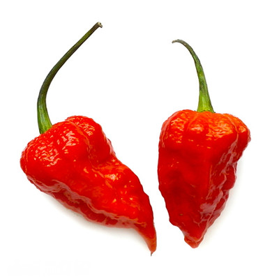 "Bhut Jolokia Chile Pepper Plant - Ghost Pepper - 2.5"" Pot"