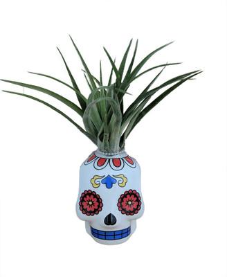 "White Sugar Skull Planter with Live Tillandsia Air Plant - 3"" x 3"""