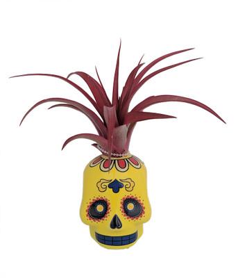 "Yellow Sugar Skull Planter with Live Tillandsia Air Plant - 3"" x 3"""