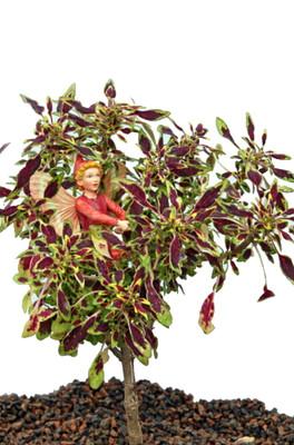 "Rare Mini Autumn Leaves Coleus Tree - Very Easy Houseplant to Grow - 2.5"" Pot"