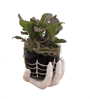 """Haunted Hand Planter with Live Pink Nerve Plant Fittonia & Spanish Moss -4""""x4"""""""