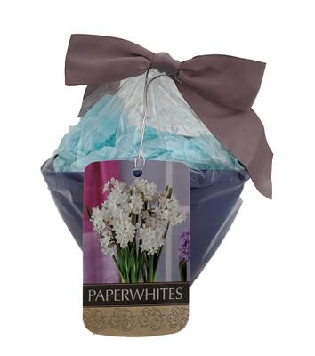 Paperwhite Narcissus Bulbs in Blue Oblong Ceramic Planter Kit