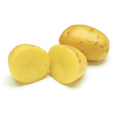 Yukon Gold Potato - 2 lbs Seed (Tubers)