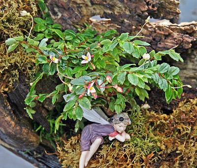 "Tiny Pink Begonia Plant - 2.5"" Pot - Terrarium/Fairy Garden/House Plant"