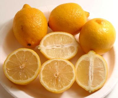 "Eureka Lemon Tree Bush Form - 6"" Pot - NO SHIPPING TO TX, FL, AZ, CA, LA, HI"