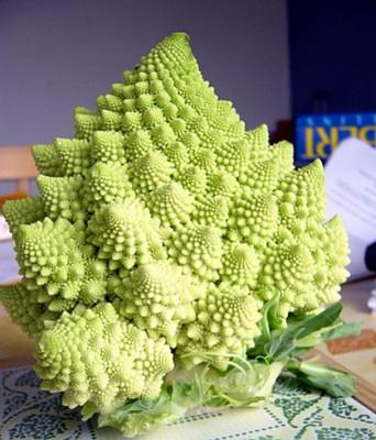 Romanesco Broccoli 50 Seeds-Heirloom-Best Taste Veggie