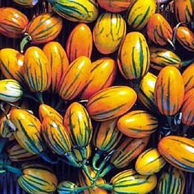 Toga Striped Eggplant 20 Seeds - Heirloom - Rare