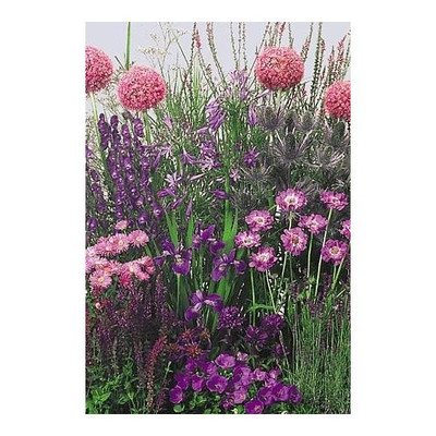 Blue Perennial Garden 50 Seeds -Tall - Easy to Grow!