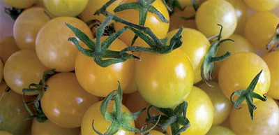 Lemon Drop Cherry Tomato - 10 Seeds - Tart & Sweet
