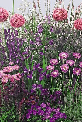 Blue Perennial Garden 50 Seeds-Medium Height