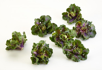Autumn Star Hybrid Kalettes - 10 Seeds - New for 2015!