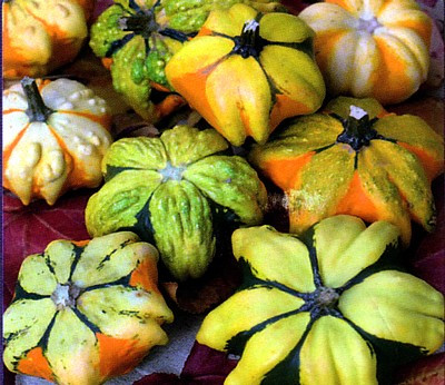 Daisy Gourd 10 Seeds - Nothing Like it in the World!