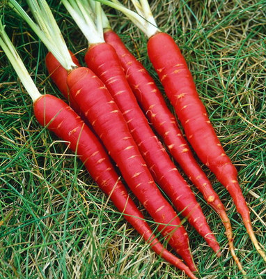 Blood Red Atomic Carrot 150 Seeds - NEW - Veggie