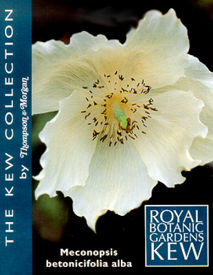 Himalayan White Poppy 20 Seeds - Meconopsis