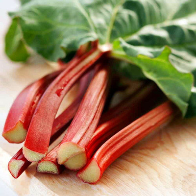 Victoria Red Rhubarb 25 Seeds-Perennial - Easy to grow
