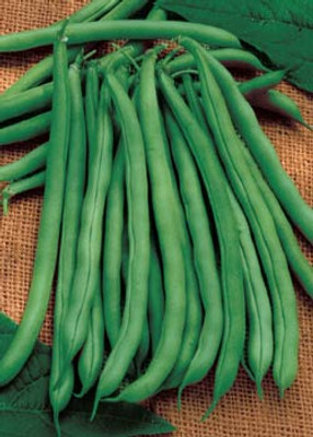 Blue Lake Bush Bean Seeds - 26 grams