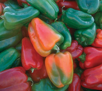 California Wonder Pepper 50 Seeds - Heirloom