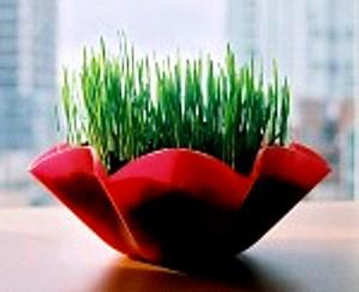 Wheat Sprouting Seeds- 4 ozs- Sweet;Salads,Soups,Bread