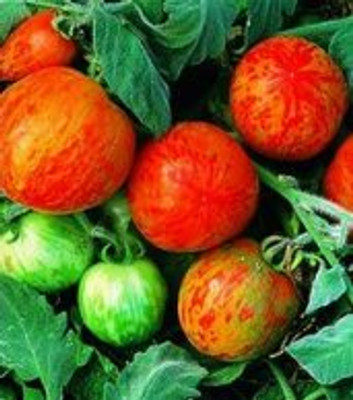 Elberta Peach Tomato - 20 Seeds - Beautiful