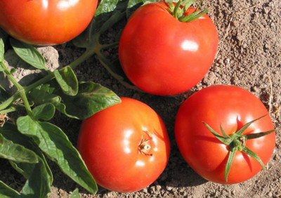 Bulgarian Druzba Tomato 15 Seeds - Heirloom