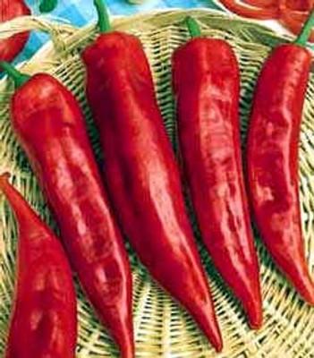 Corno Di Toro Pepper 25 Seeds- Heirloom