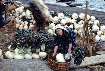 World's Largest Radish 20 Seeds - 100+lbs