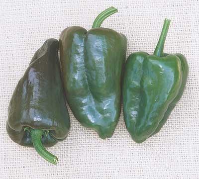 Mulato Island Pepper - 20 Seeds - Ancho Type