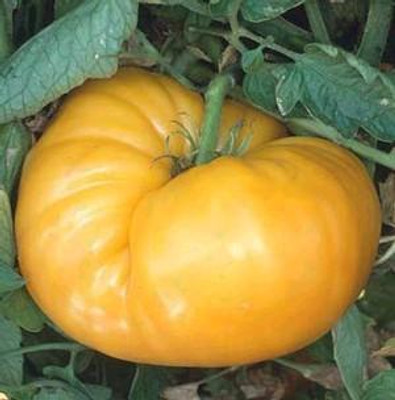Kentucky Beefsteak Tomato 10 Seeds - HEIRLOOM