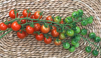 Sugar Lump Cherry Tomato - 20 Seeds - German Heirloom