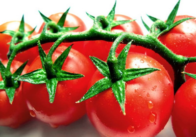 Calypso Tomato - 20 Seeds - High Yields