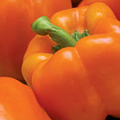 Orange Sun Pepper - 20 Seeds - Solar Orange