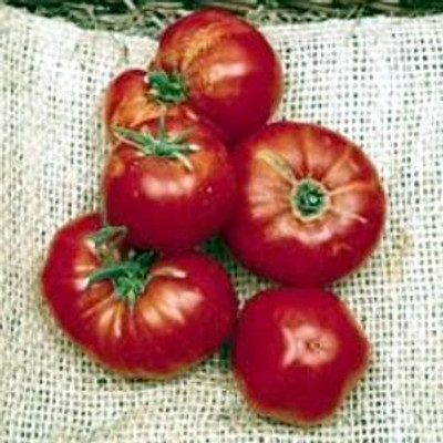 Omar's Lebanese Tomato 35 Seeds -Heirloom Beefsteak