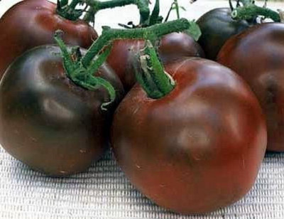 Black Prince Tomato 15 Seeds - Heirloom -From Siberia