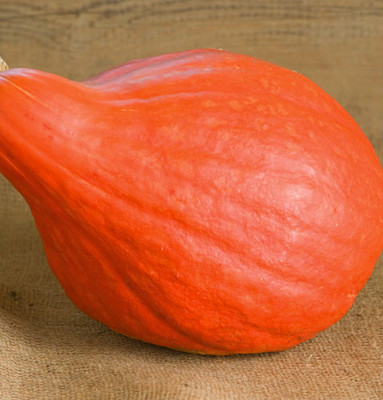 Red October Pumpkin - 10 Seeds - Ornamental & Edible