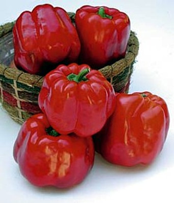 North Star Sweet Pepper - 10 Seeds - Green to Red