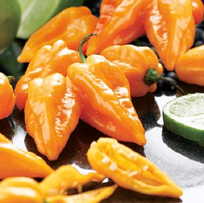 Magnum Orange Habanero Pepper - 20 Seeds