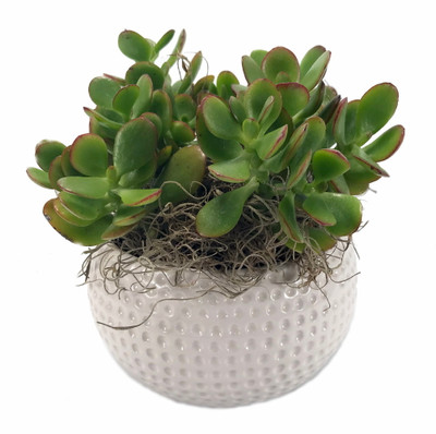 "Golf Ceramic Sports Planter with Live Succulent Plant  - 4.25"" x 3.25"""